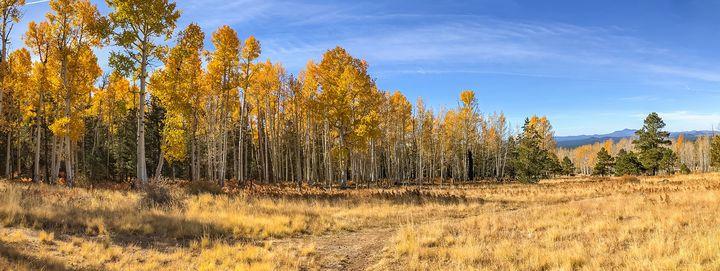Hart Prairie Fall Panorama - TL Wilson Photography