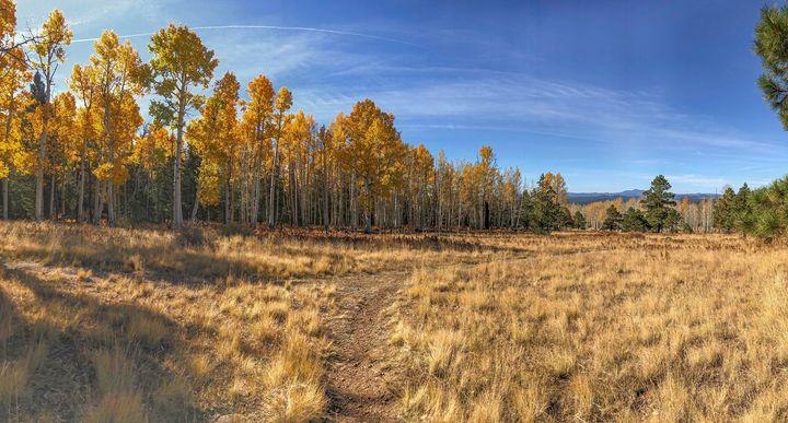 Hart Prairie in the Fall - TL Wilson Photography
