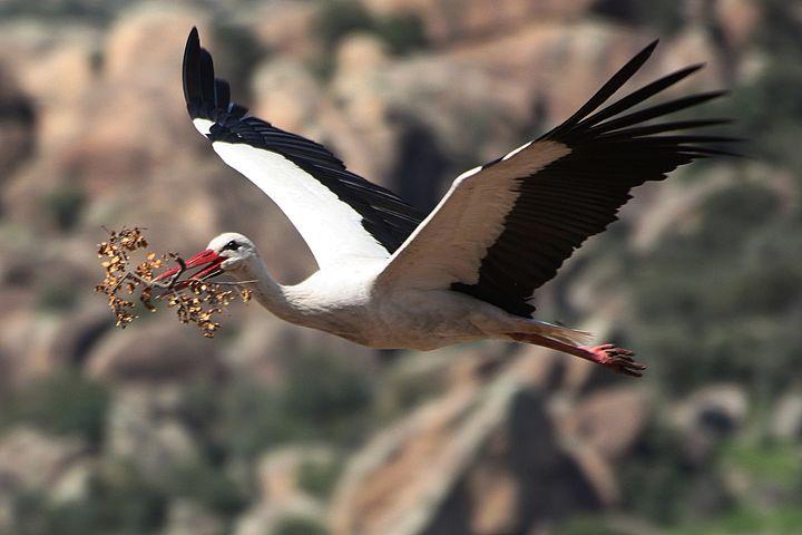 Mather Stork - soulgame