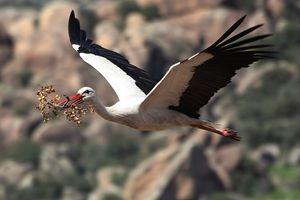 Mather Stork