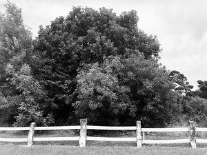 Along the Tree-line