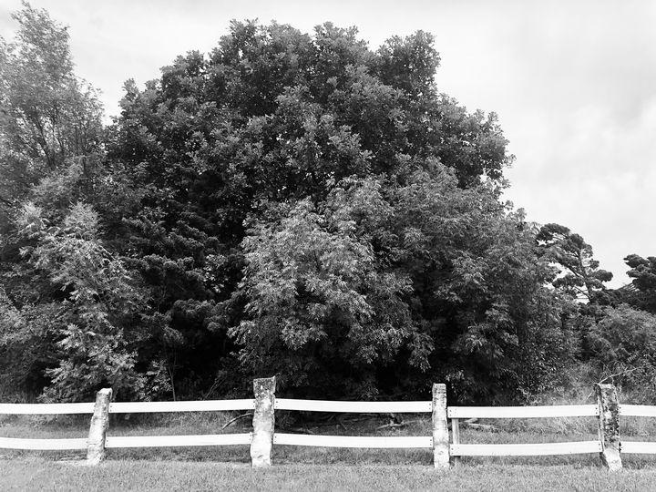 Along the Tree-line - J Paul Gallery