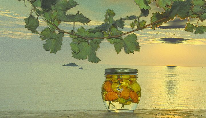 Peppers in the pickle vase - Adriatic picture factory