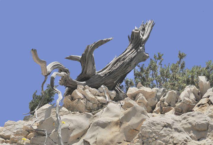 Mediterranean sculpture stone & wood - Adriatic picture factory