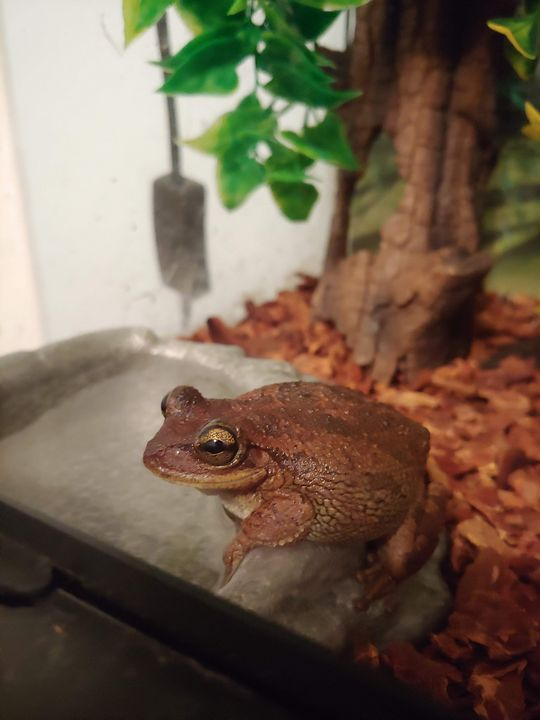 Gunther the Frog - Gallery I