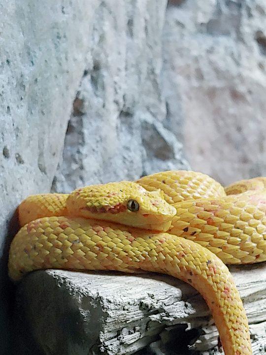 Resting Snake - Gallery I
