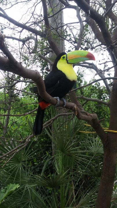 Toucan - Gallery I