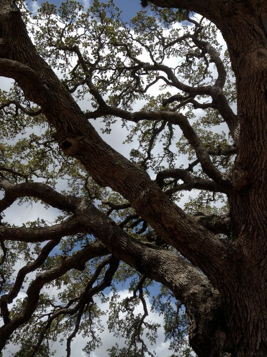 Branches - Gallery I