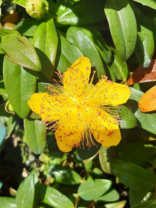 Yellow glory - Lauraartist68