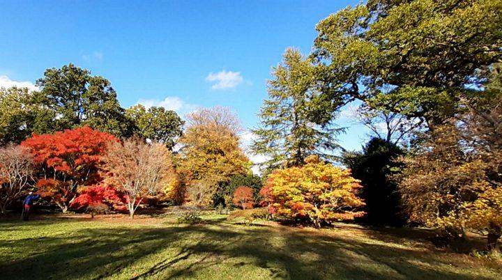 Arboretum - Lauraartist68