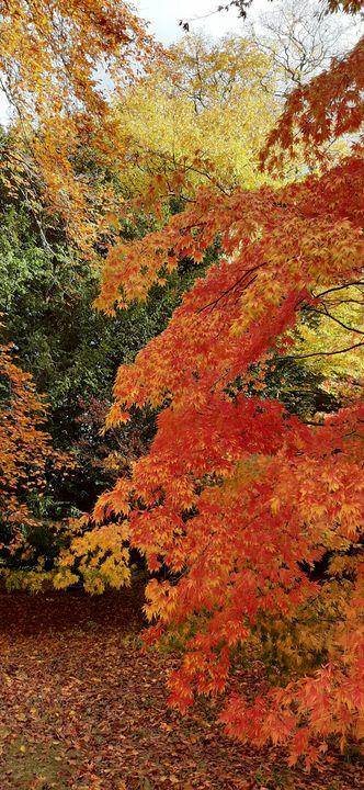 Autumn colours by lauraartist68 - Lauraartist68