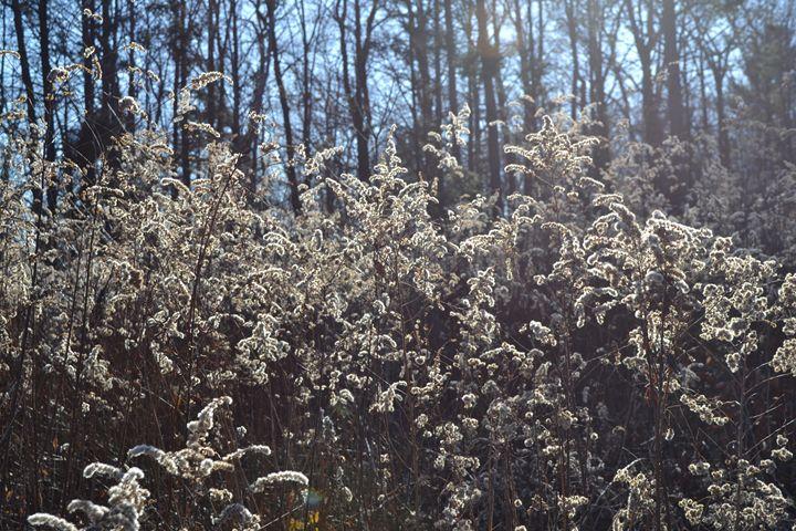 spring snow - Zee