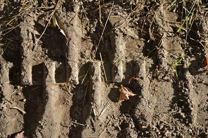 Mud Tracks - Zee