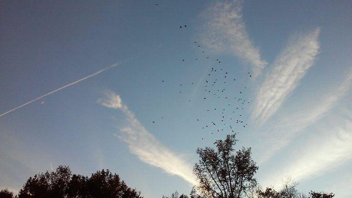 Burst of the Winged Angels - Darien Mann