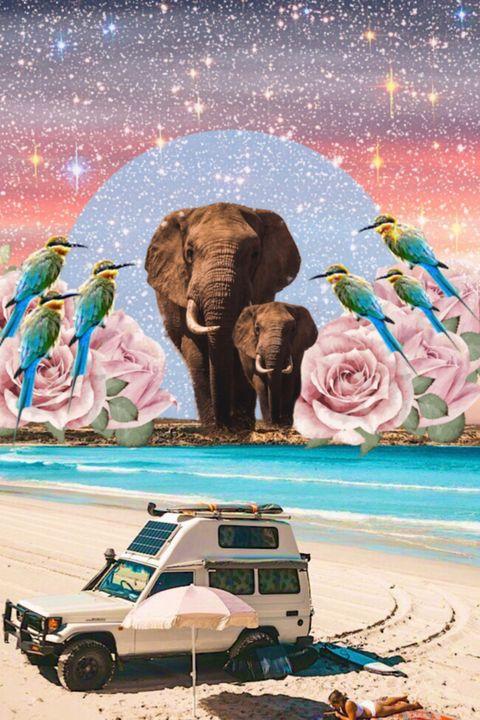 The elephant's beach - ArtCollage