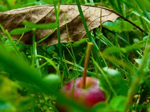 Crab-apple and Leaf in the Grass