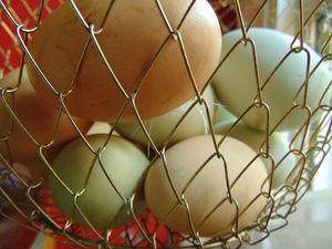 Basket of Chicken Eggs