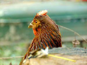 Red Orange Chicken