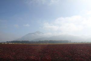 Vineyard. Valle De Elqui, Chile