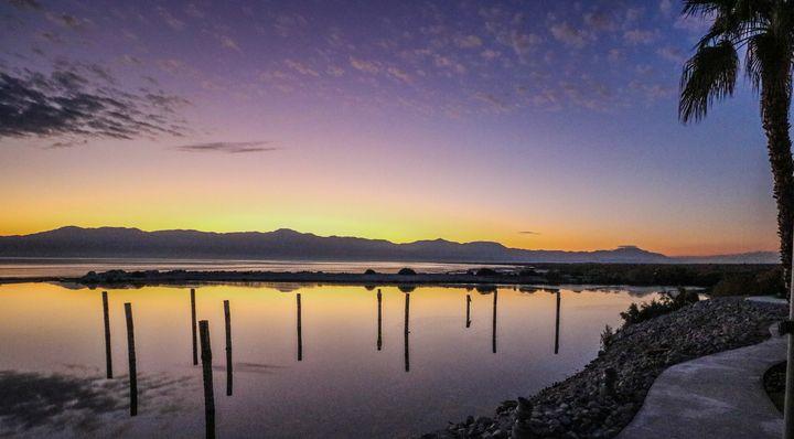 Salton Sea No. 4 (Colors Palm) - Crystal Enciso Photography