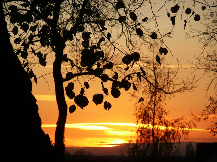 Silhouette at Sundown - Charlotte