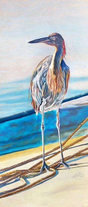 Western Reef Heron - Faythe Mills