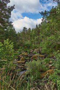 Sweden 182