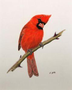 The Curious Cardinal - ZalikArts