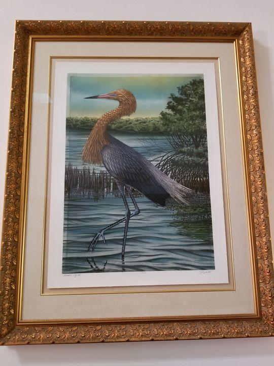 Reddish Egret -  Luannematthew