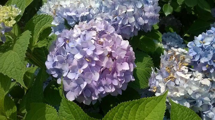 Natures Bouquet - H.Megami