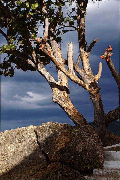 Almond Tree - Daamonturne Project