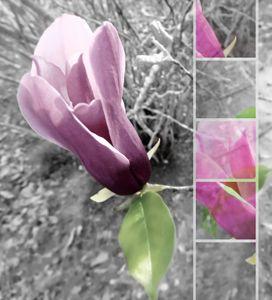 Emerging Iris