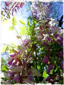 Burst of Color with Wisteria - SodStar Creations