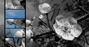Blue Skies and Blossoms 2