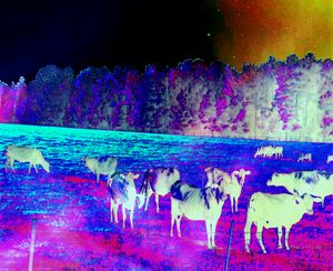 Bovine Dreams