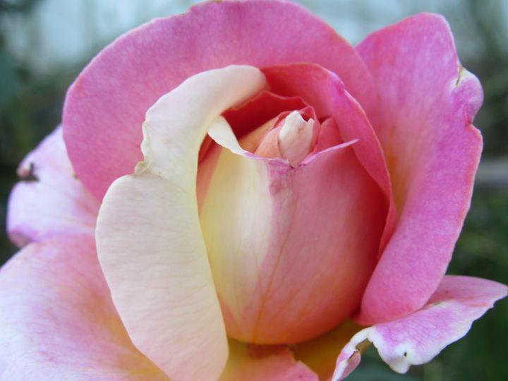 Blooming Rose - Alexies Nicals