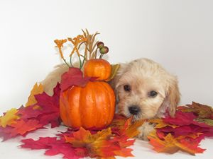 Puppy and Leaves