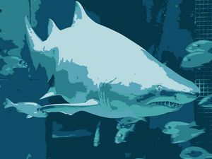 Shark vector derivation - NubesDesignCH