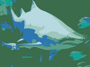 Shark vector derivation