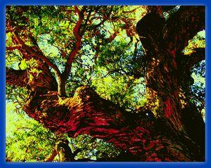 Iridescent Woods