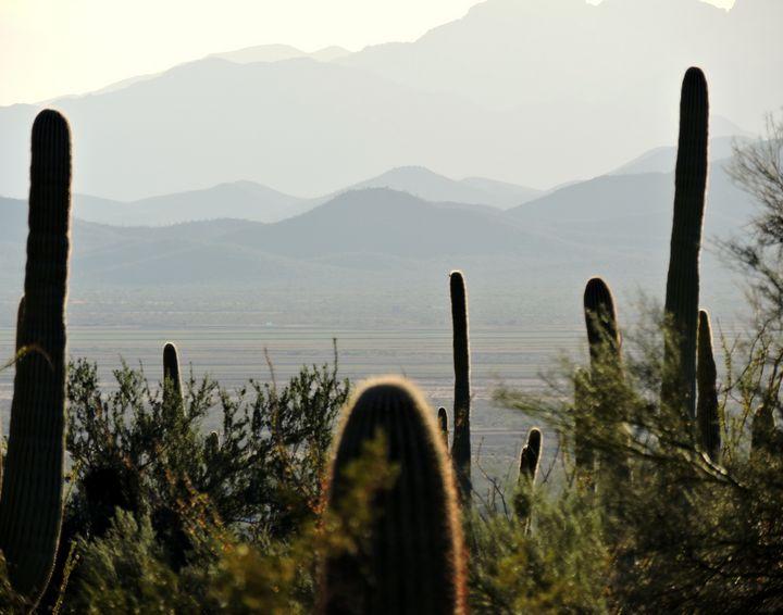 Arizona Desert I - C&J fine arts