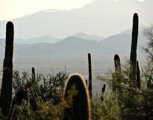 Arizona Desert I