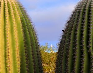 The Cross in the Desert
