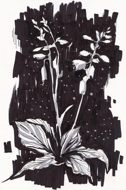 Mystical flowers - Ksenia Katastrofa Art and photo