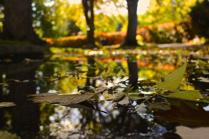 Fall in Boise - M. Nanna Photography