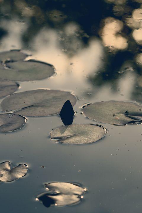 Lily Pad - M. Nanna Photography
