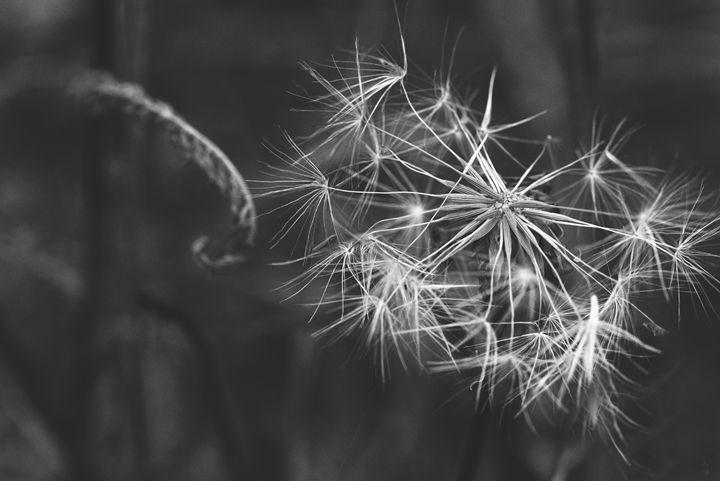 Make a Wish - M. Nanna Photography