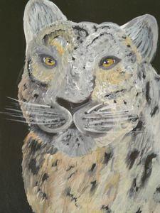 Tibetan lepard