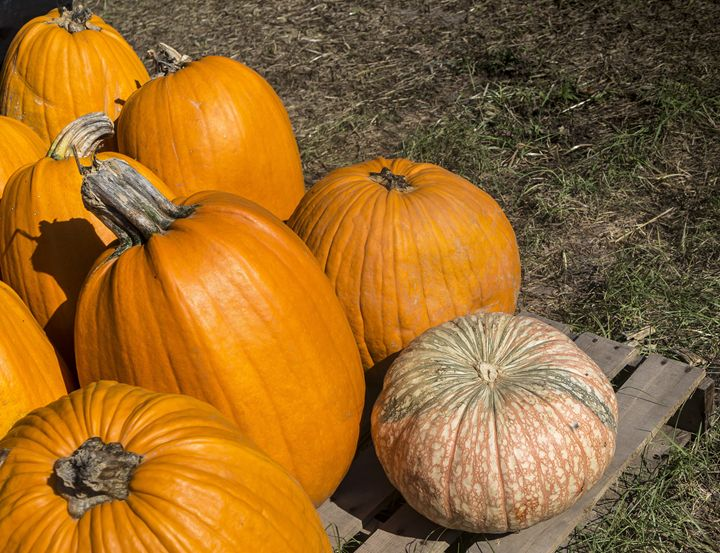 Mottled Pumpkins - David J Riffey