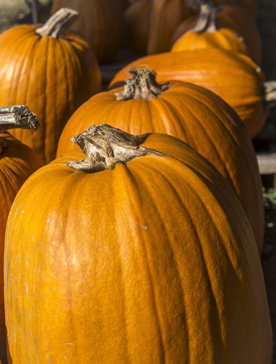 Pumpkins - David J Riffey